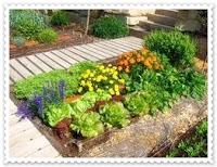 Huerto y maceto huerto ecol gico guia y planificaci n de for Asociacion de plantas en el huerto