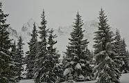 Zimowy kadr