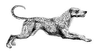 Dog Dalmatian Clip Art