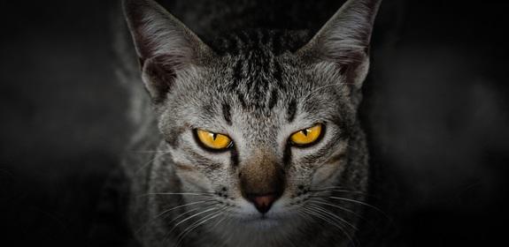 Cães e gatos podem ver em ultravioleta