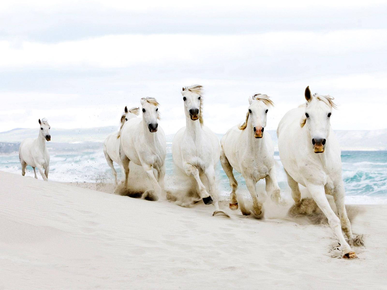 Wonderful   Wallpaper Horse Pinterest - horse+wallpapers+hd+(16)  Best Photo Reference_132674.jpg