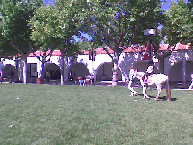 Olja 39 s team ganador del nacional 2011 festeiro for Jardines de poni