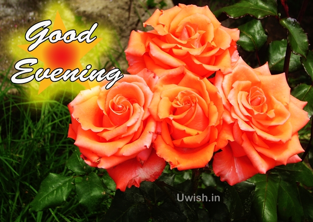 Good evening with flowers. Good evening wishes and greetings images to wish your loved ones.