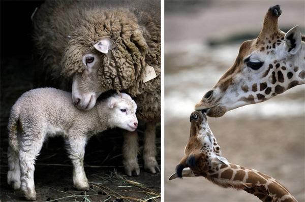 Мир животных детеныши животных