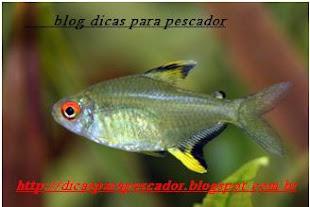 blog dicas para pescador
