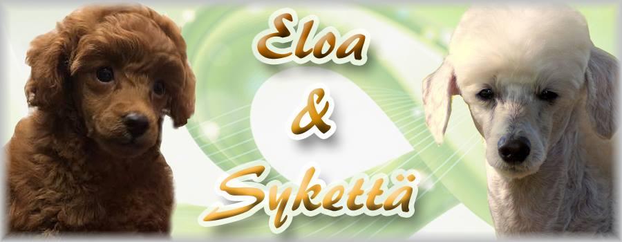 Eloa & Sykettä