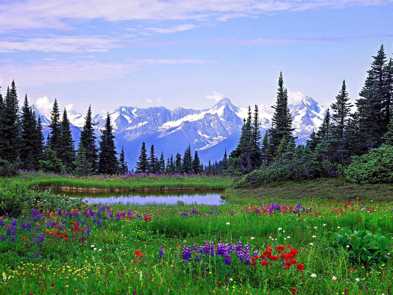 BANCO DE IMGENES Nuevos paisajes con flores para decorar y