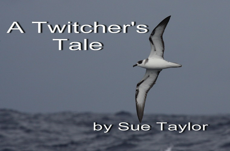 A Twitcher's Tale