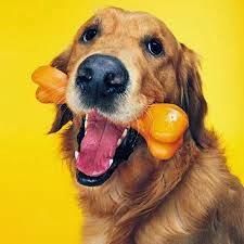como entrenar un perro