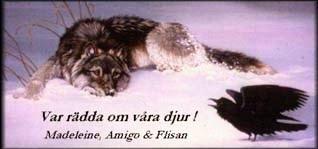 Abbi cura dei nostri animali