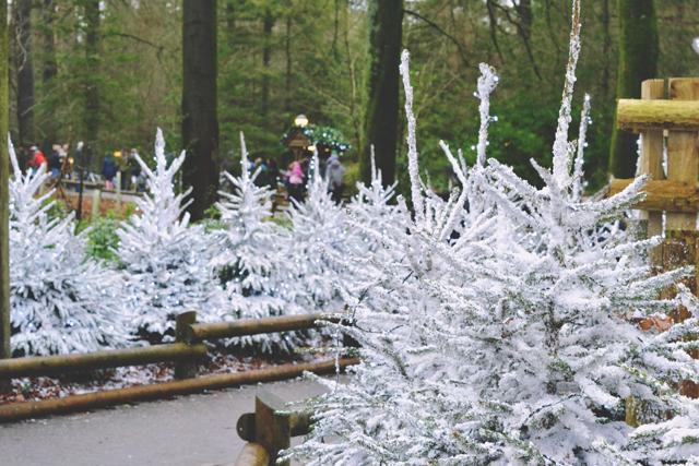 CenterParcs Snowy Christmas Trees
