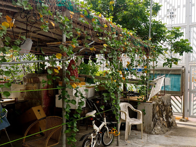 Creeping vines on a shelter in Yung Shue Wan, Lamma Island, Hong Kong