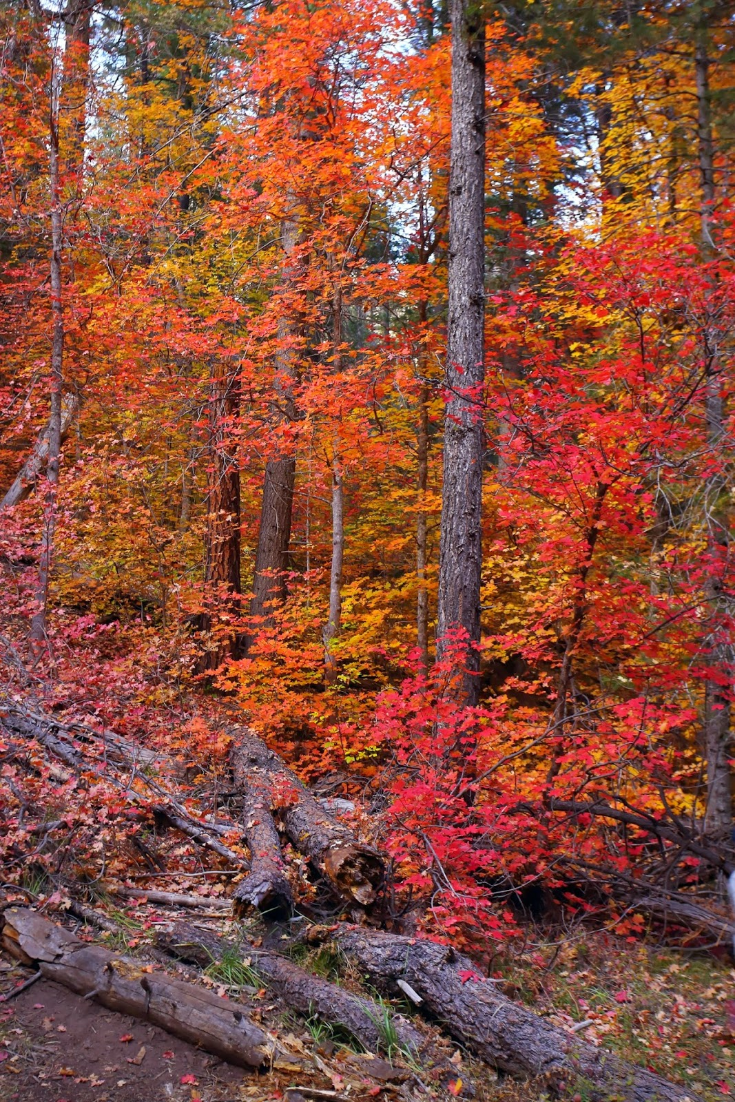 I Heart AZ: Fall Colors in Oak Creek Canyon by Jones Family Photography