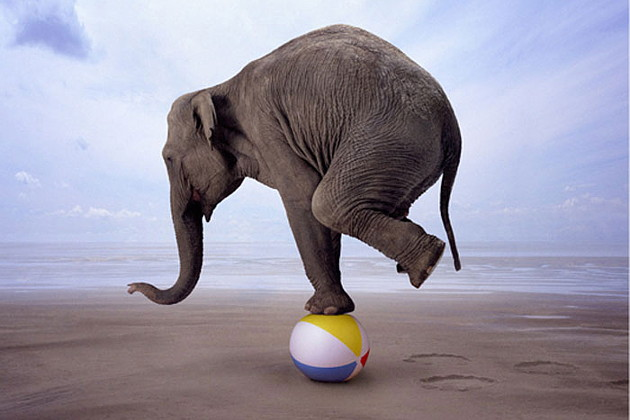 joaca-elefant