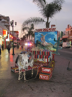 Photo on Tijuana's Donkey (Zonkey)?