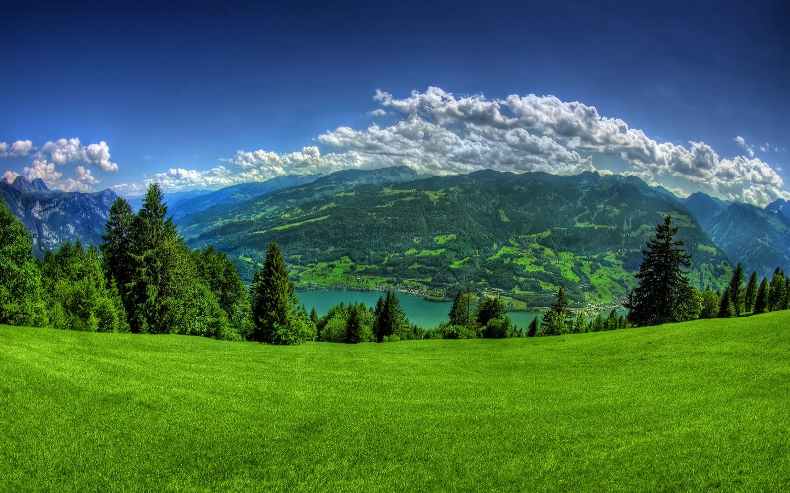 pemandangan alam hijau pemandangan