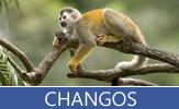 Imágenes de changos, monos, simios, orates, primates y gorilas