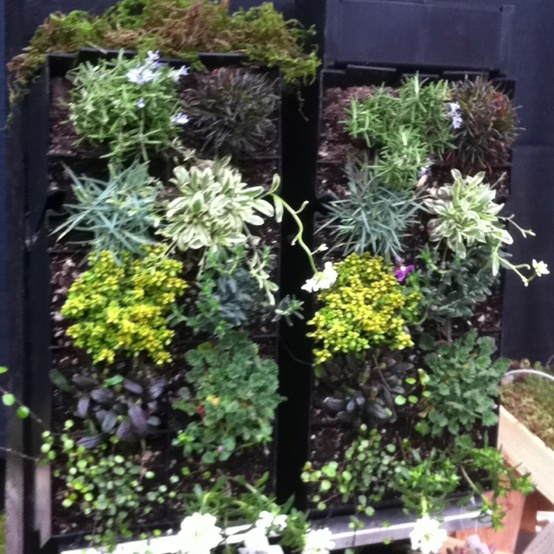 Xardinnova jardines verticales diferentes for Diferentes jardines