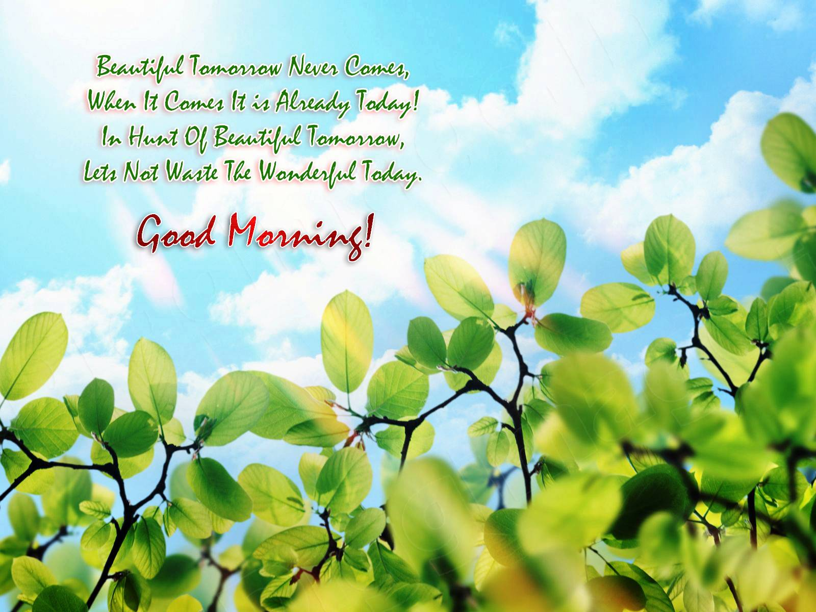 New Morning Quotes Wallpaper