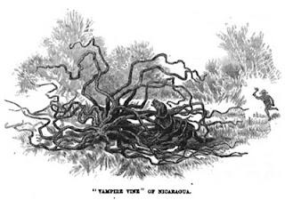 Misteri Pohon-Pohon Yang Bisa Memakan Manusia