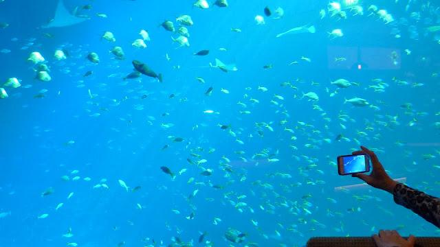 Image Result For Aquarium In Greensboro