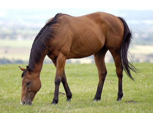 All About Animal Wildlife: Horse Facts and Images 2012