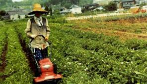 Pertanian Perbedaan Pertanian Tradisional Dan Pertanian Modern
