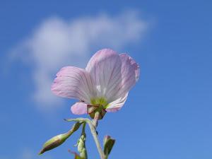 田舎暮らしは賃貸でをスローガンに町おこしBlogの花