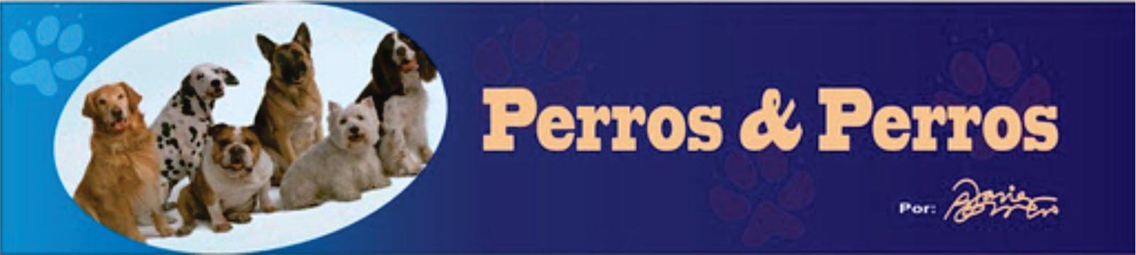 Perros & Perros