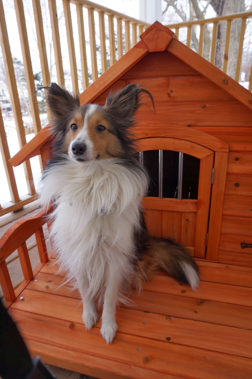 At the fence pet squeak porch pups dog house for Pet squeak dog house