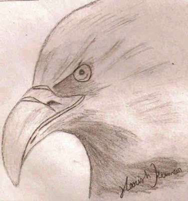 Hawk Pencil Sketch