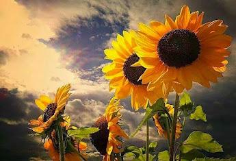 Un Cuore nel Sole