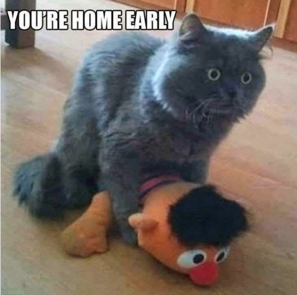 You Are Home Early