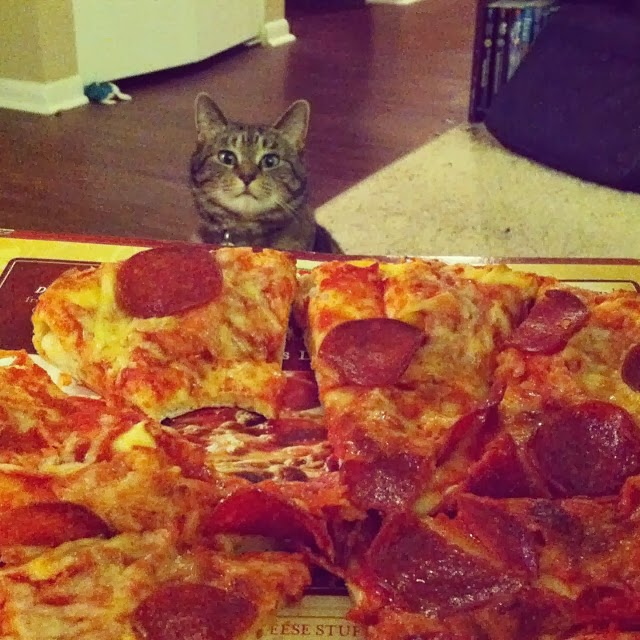 Funny cats - part 88 (40 pics + 10 gifs), cat wants some pizza