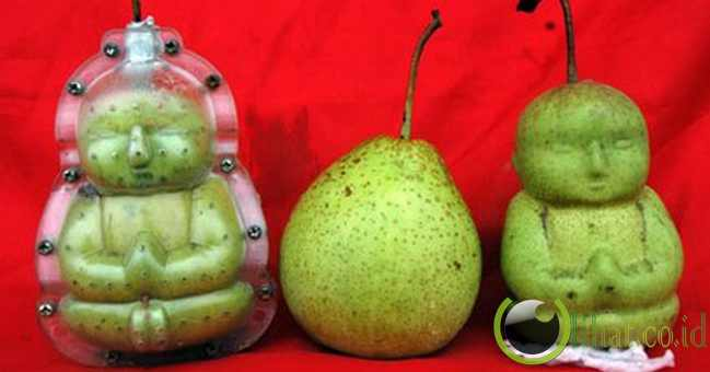 2. Buddha Shaped Pears