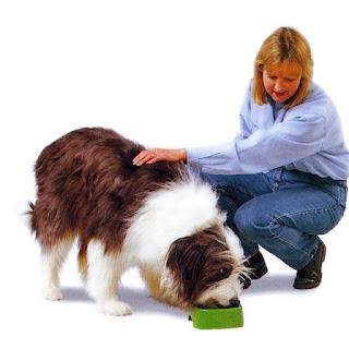Comida adecuada para tu perro