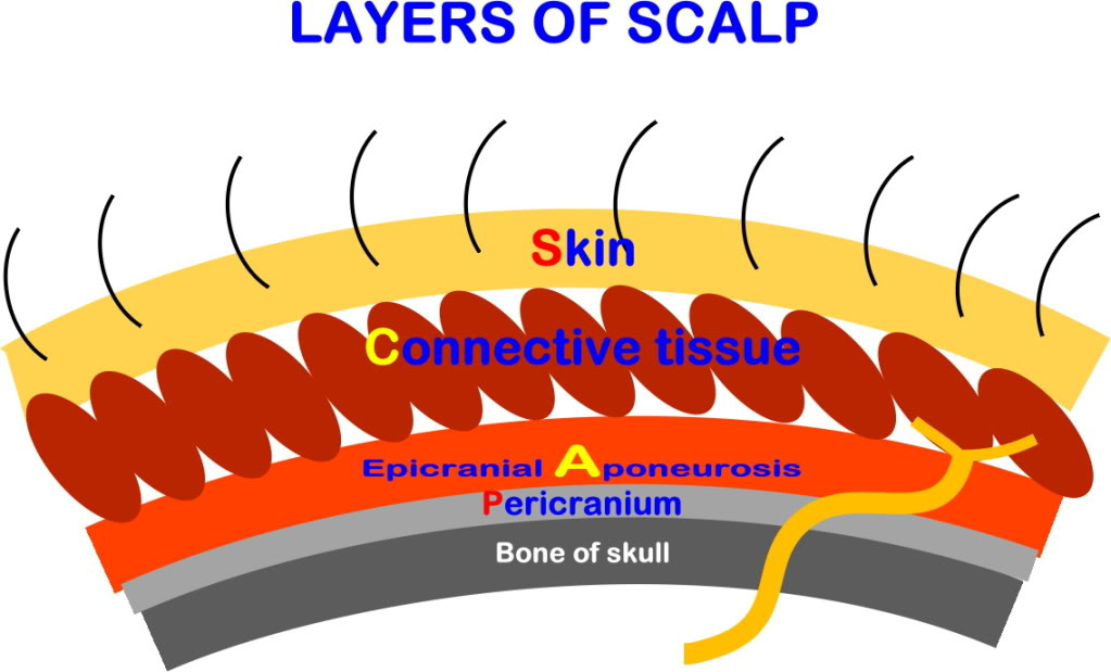 Med4me Scalp Layers