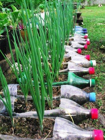 Welcome to the green heart den gardening with for Garden design using plastic bottles