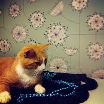kissut