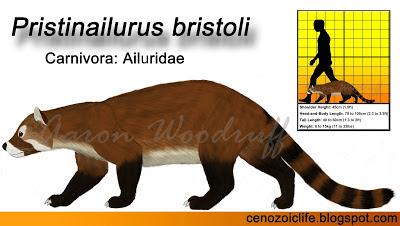 Pristinailurus