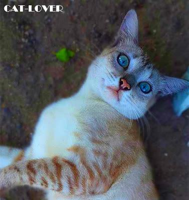 Foto-foto Kucing Yang Cantik Dengan Kamera Smartphone