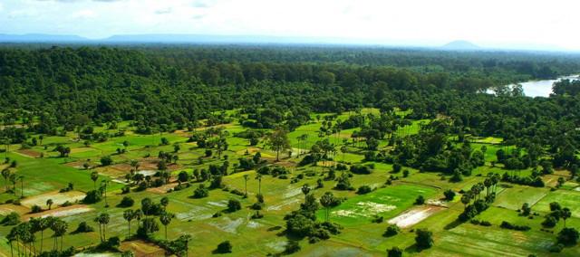 Cultivos y selva en Angkor Wat