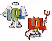 Colesterol - Qual a diferença entre HDL e LDL?