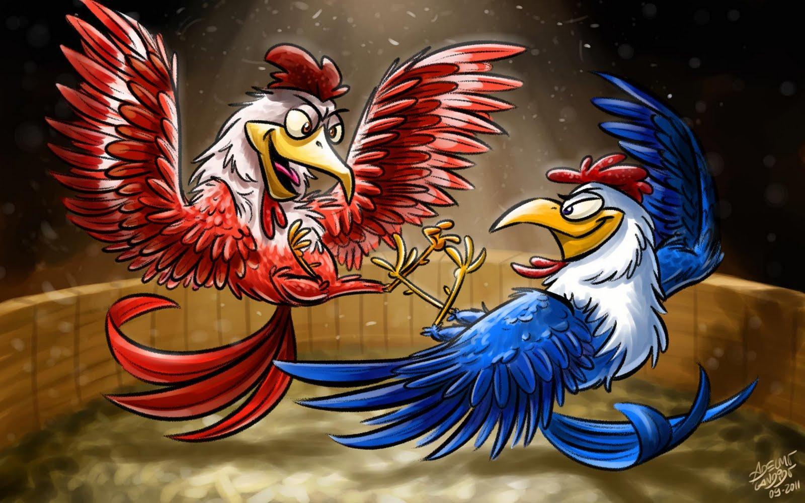 Resultado de imagem para galos brigando no galinheiro