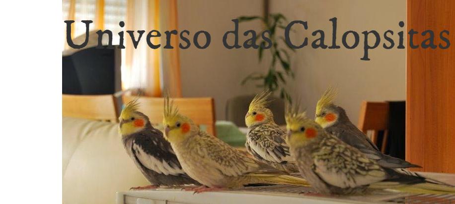 Universo das Calopsitas
