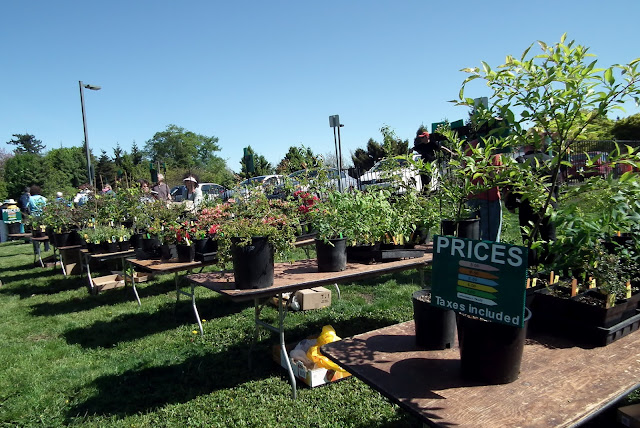 A Growing Affair, May 12- perennials sale area, UBC Botanical Garden , Vancouver