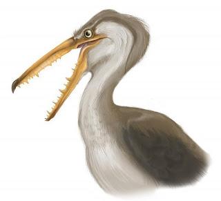 gruiformes prehistoricos Pelagornis