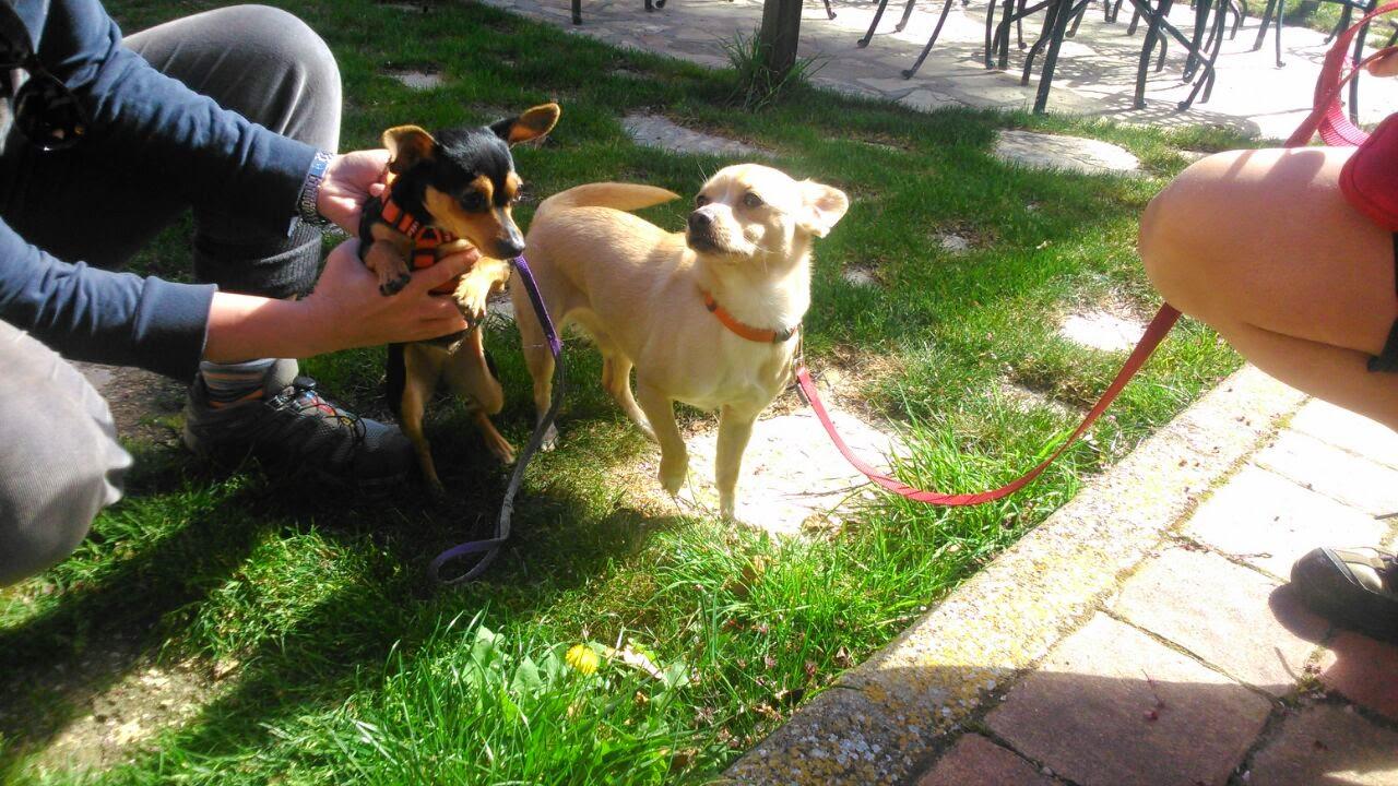 hotel que acepta mascotas Cuenca