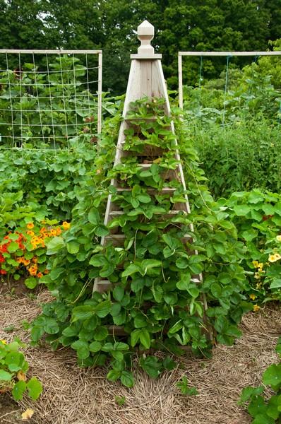 The painted blackbird wild garden love for Blackbird designs strawberry garden