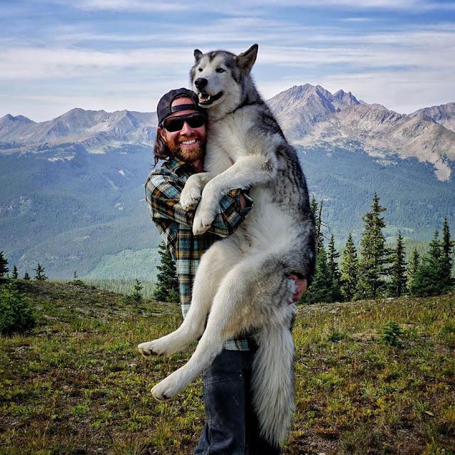 Conheça Loki, O Wolfdog que encara aventuras épicas com seu dono